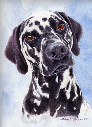 """Dalmatian Head Study"" A Limited Edition Print"