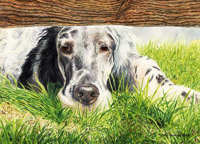 """Missing You"" A Limited Edition English Setter Print"