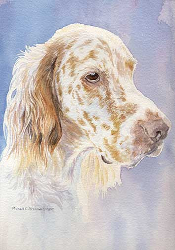 """English Setter Head Study II"" A Limited Edition Print"