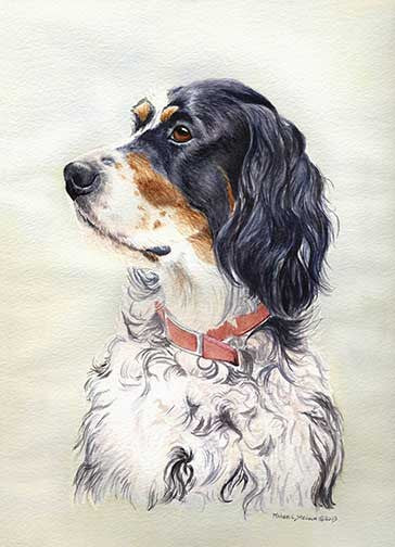 """English Setter Head Study"" A Limited Edition Print"