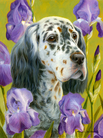 """English Iris"" A Limited Edition English Setter Print"