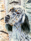 """Birches"" A Limited Edition English Setter Print"