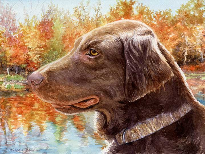 """Colors"" A Limited Edition Flat Coated Retriever Print"