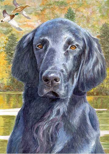 """Fall Days"" A Limited Edition Flat Coated Retriever Print"