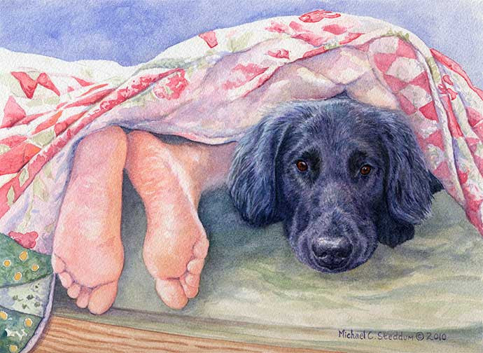 """Flat Coat Feet"" A Limited Edition Flat Coated Retriever Print"