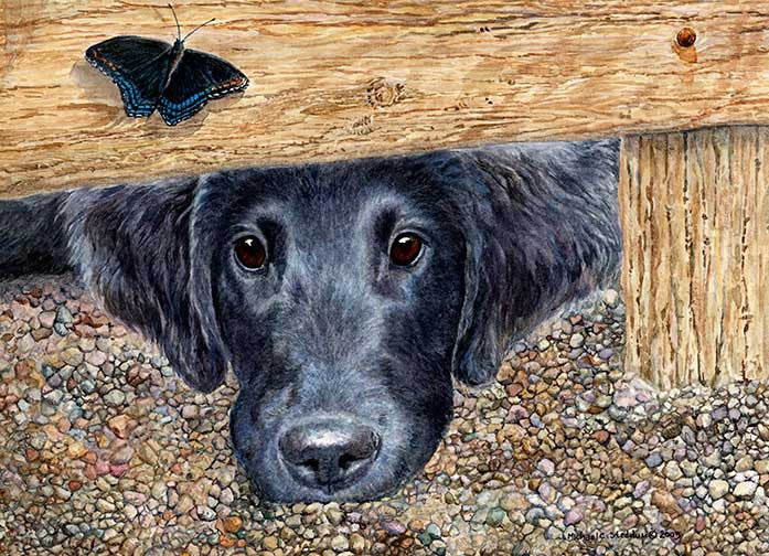 """Get It"" A Limited Edition Flat Coated Retriever Print"