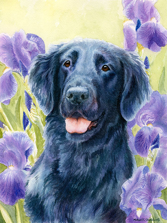 """Glory"" A Limited Edition Flat Coated Retriever Print"