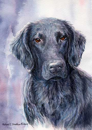 """FCR Head Study II"" A Limited Edition Flat Coated Retriever Print"