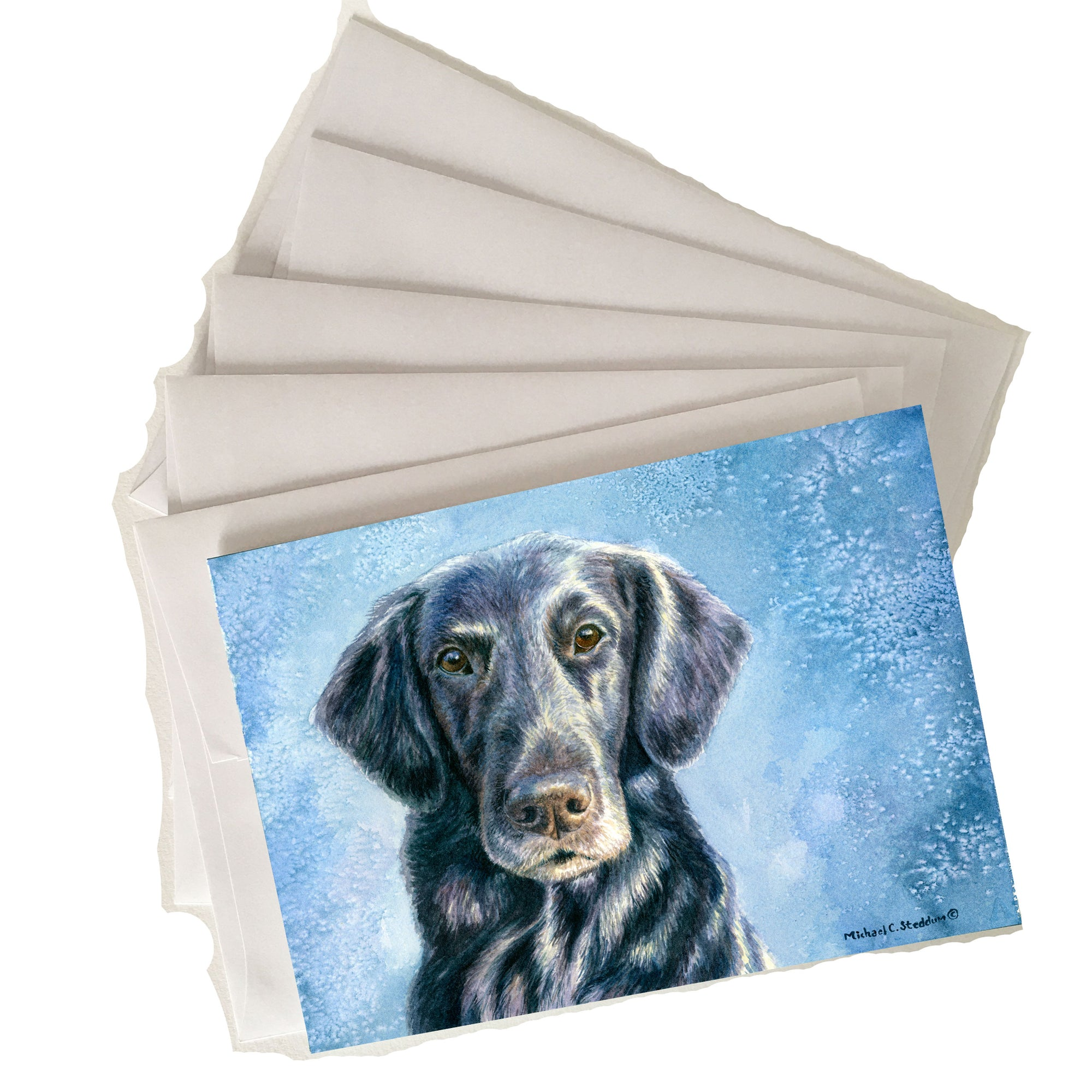 Flat Coated Retriever Note Card Set Intensity. Set of five cards with envelopes