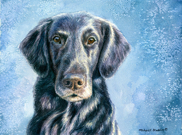 """Intensity"" A Limited Edition Flat Coated Retriever Print"