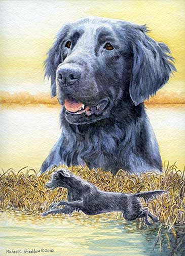 """FCR Splash"" A Limited Edition Flat Coated Retriever Print"