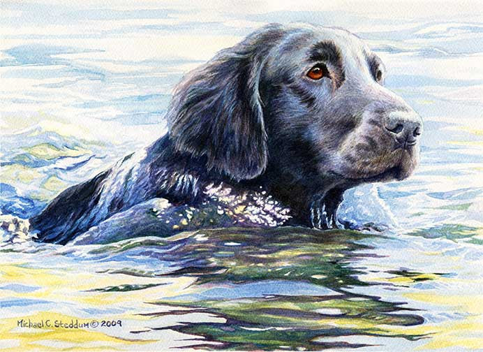 """Flat Coat Swim"" A Limited Edition Flat Coated Retriever Print"