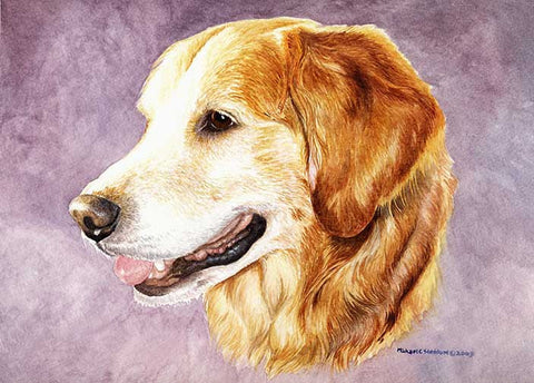 """Golden Retriever Head Study"""