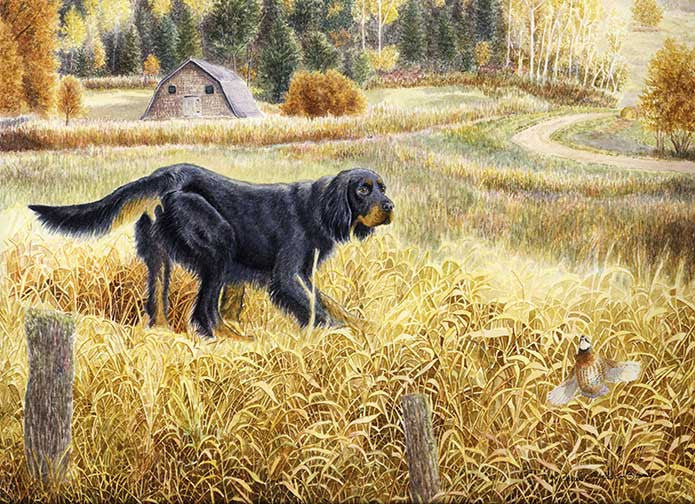 """Gordon & Quail"" A Limited Edition Gordon Setter Print"