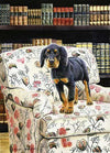 """The Scholar"" A Limited Edition Gordon Setter Print"