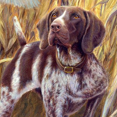 """Steady to Wing"" A Limited Edition German Shorthaired Pointer Print"