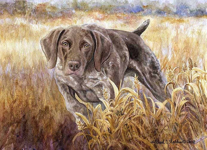 """Strike"" A Limited Edition German Shorthaired Pointer Print"