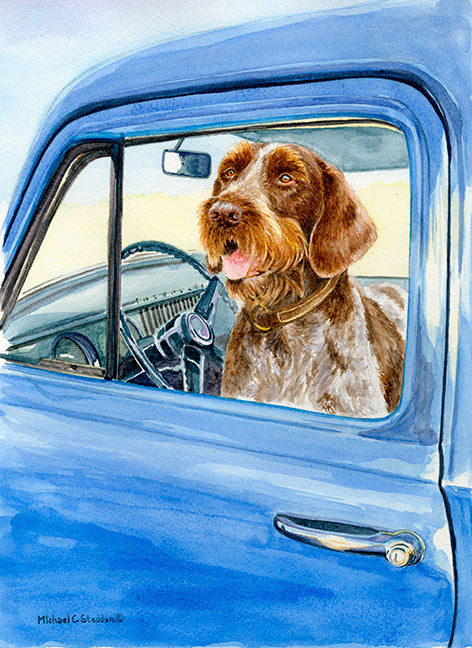 """Sunday Driver"" A Limited Edition German Wirehaired Pointer Print"