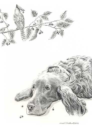 """Bird Droppings"" A Limited Edition Irish Setter Print"
