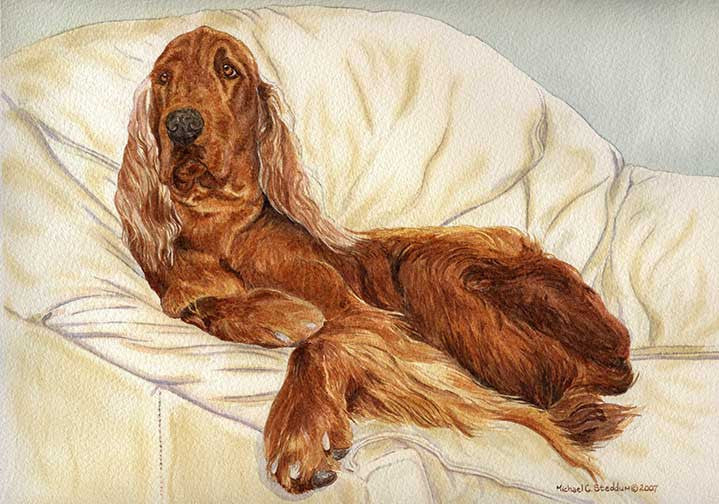 """Comfortable"" A Limited Edition Irish Setter Print"