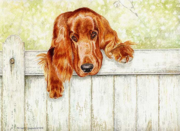 """Fence Talker"" A Limited Edition Irish Setter Print"