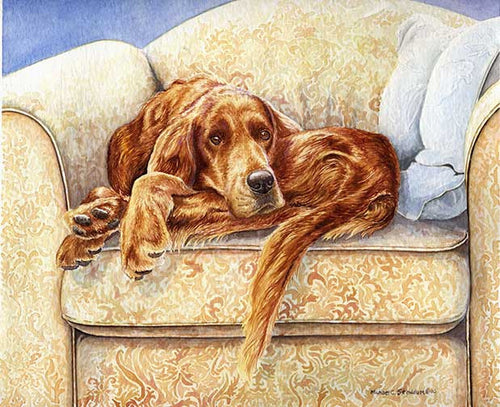 """Irish In a Ball"" A Limited Edition Irish Setter Print"