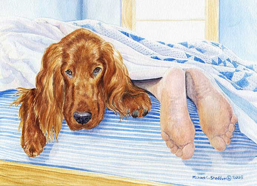 """My Other Feet"" A Limited Edition Irish Setter Print"