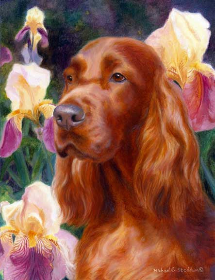 """Spring Setter"" A Limited Edition Irish Setter Print"