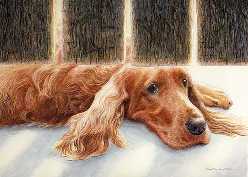 """Watching & Waiting"" A Limited Edition Irish Setter Print"