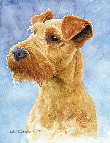 """Irish Terrier Head Study IV"" A Limited Edition Print"