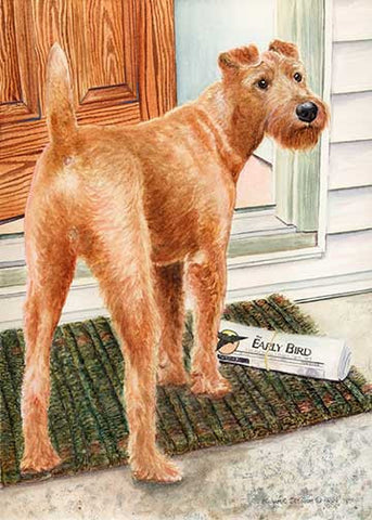"""Paper Boy"" A Limited Edition Irish Terrier Print"