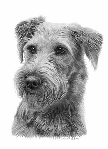 """Irish Terrier Pencil"" A Limited Edition Print"