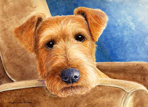 """Repose"" A Limited Edition Irish Terrier Print"