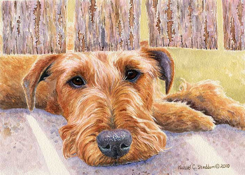 """Watching & Waiting"" A Limited Edition Irish Terrier Print"
