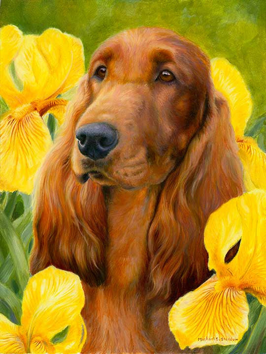 """Contemplation"" A Limited Edition Irish Setter Print"