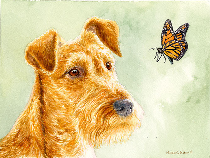 """Flight Path"" A Limited Edition Irish Terrier Print"