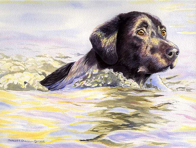 """Water Dog"" A limitied Edition Labrador Retriever Print"