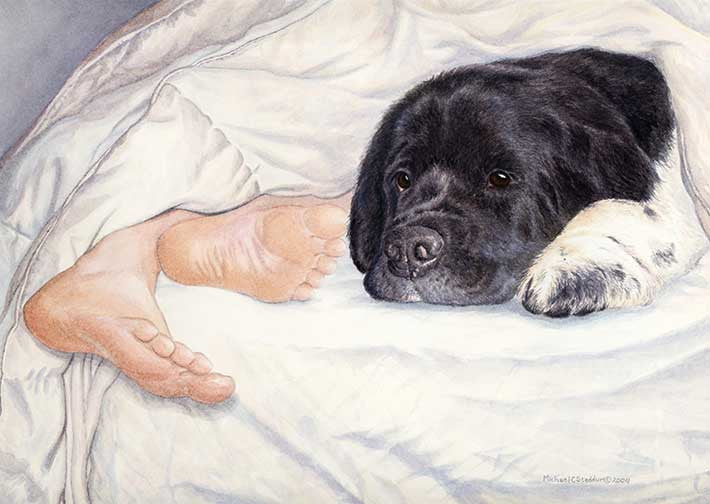 """Newfy Feet"" A Limited Edition Newfoundland Print"