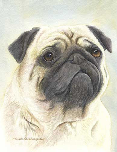 """Pug Head Study"" A Limited Edition Print"