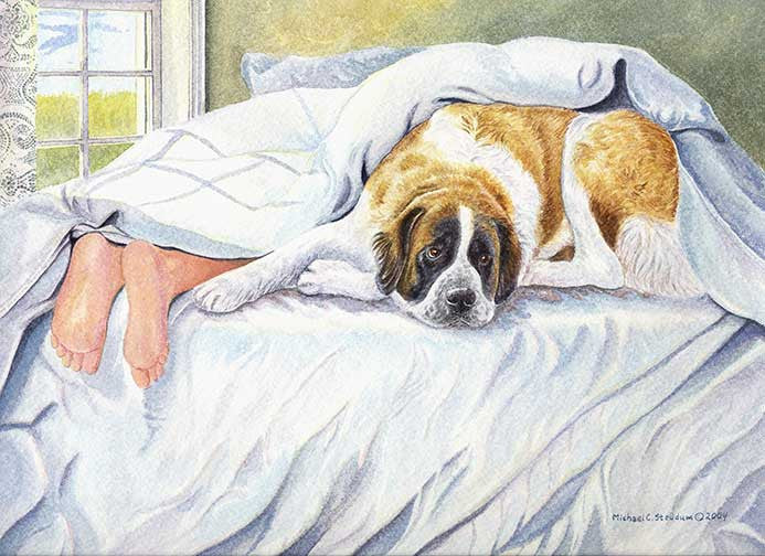 """Saint Feet"" A Limited Edition Saint Bernard Print"