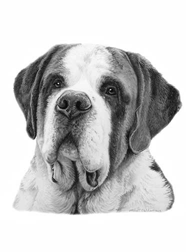 """Saint Bernard Pencil Print"" A Limited Edition Print"