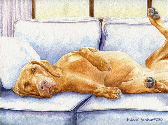 """Days End"" A Limited Edition Vizsla Print"