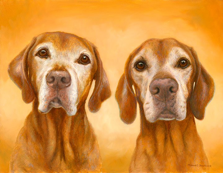"""I Heart You"" Limited Edition Vizsla Print"