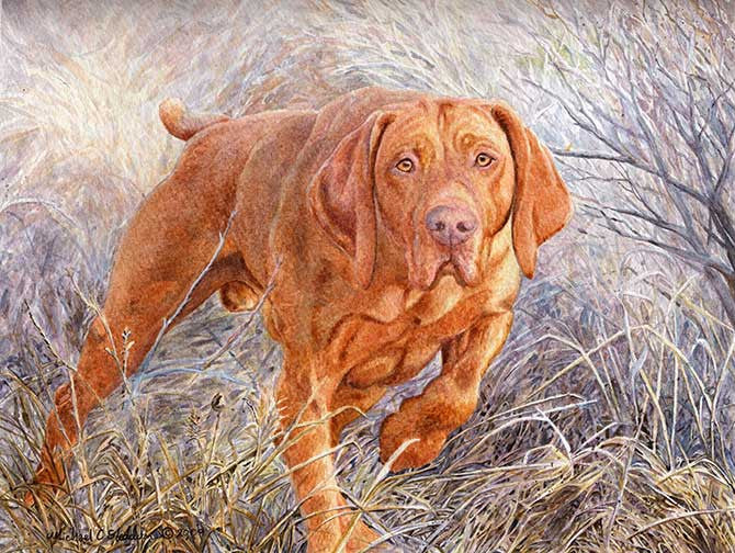 Locked Vizsla Limitied Edition Print