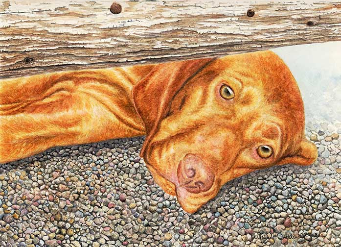 Missing You Vizsla Print