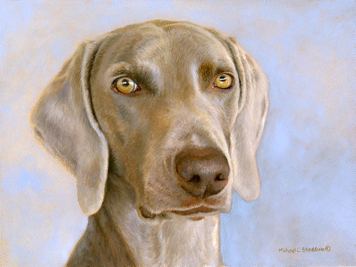 """Weimaraner Head Study"" Limited Edition Print"