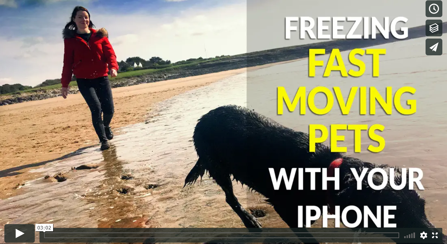 How to use your mobile phone to capture great shots of your fast moving pet