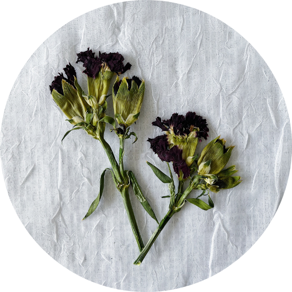 Red Pressed Carnations