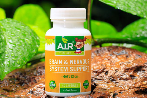 Brain and Nervous System Support