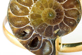 nautilus shell close up